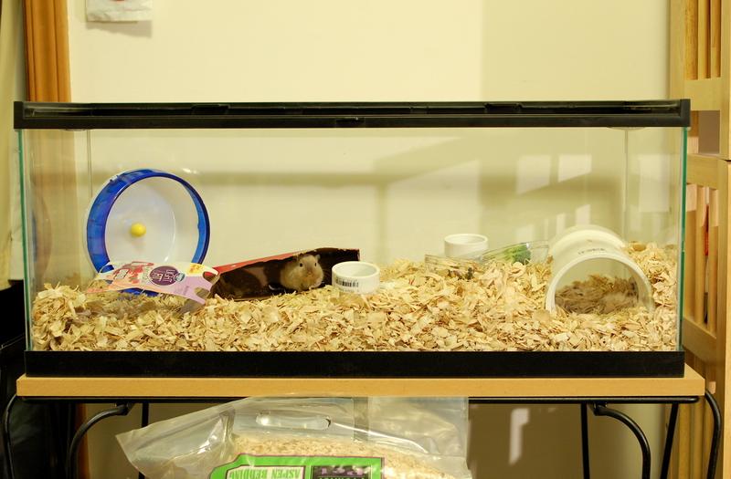 gerbil aquarium